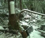 Pacific Marten Research Assistant