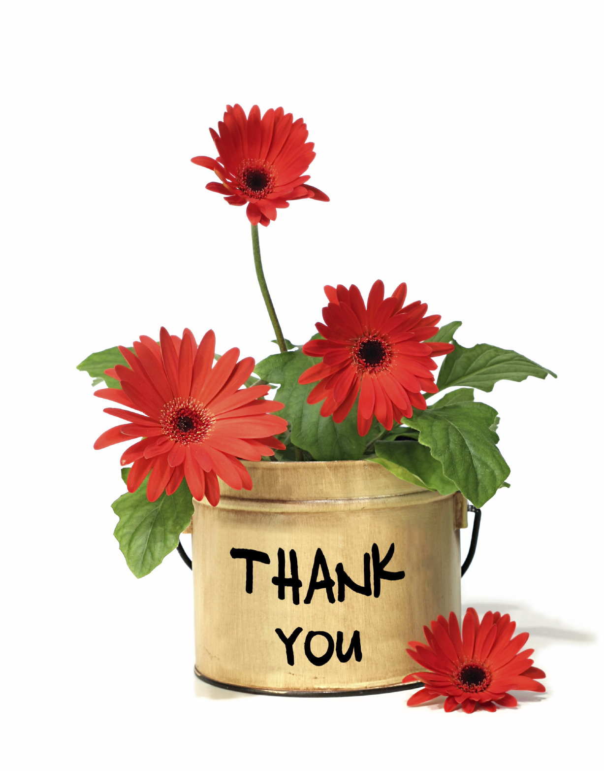iStock_000006116537_Thank_You